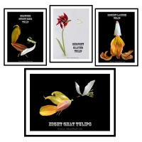 More Imagined Flowers - by Alison Shull