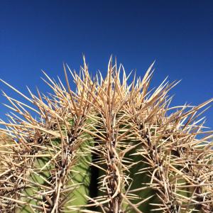 Cactus01-AlisonShull