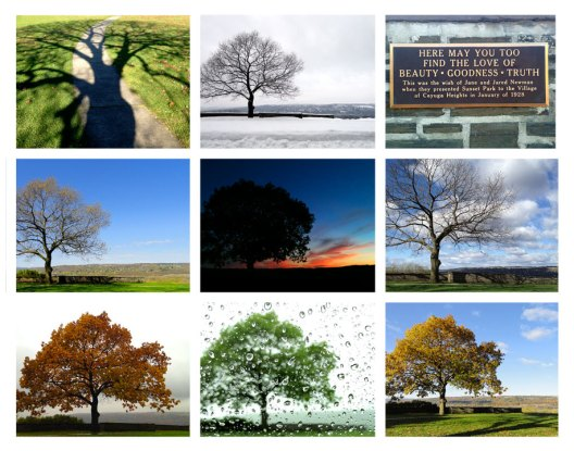 The Tree - Many Flavors by Alison Shull