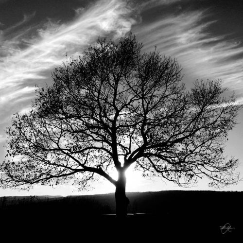 The Tree - November Late Afternoon by Alison Shull