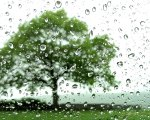 The Tree - Summer Rain by Alison Shull